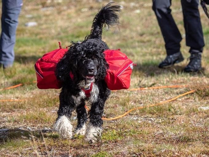 Med hund på tur